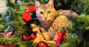 Come Fare l'Albero di Natale a Prova di Gatto