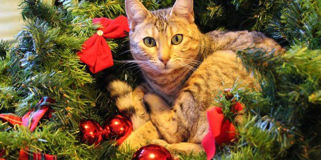 Come Fare Lalbero Di Natale A Prova Di Gatto Cose Di Gatti
