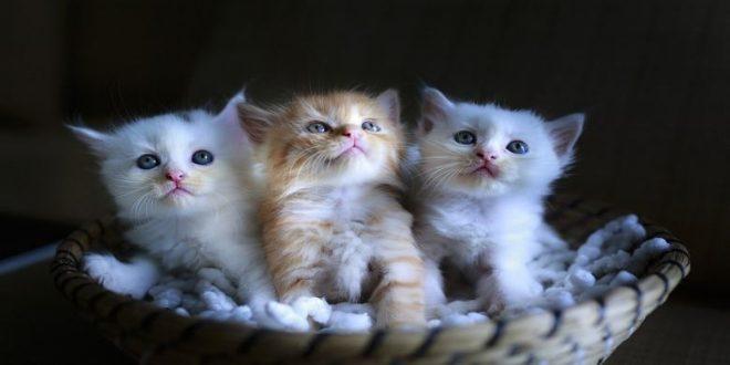 carattere-del-gatto-e-colore-del-pelo