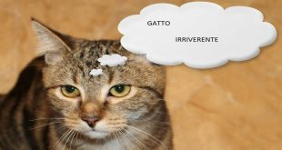 gatto-irriverente