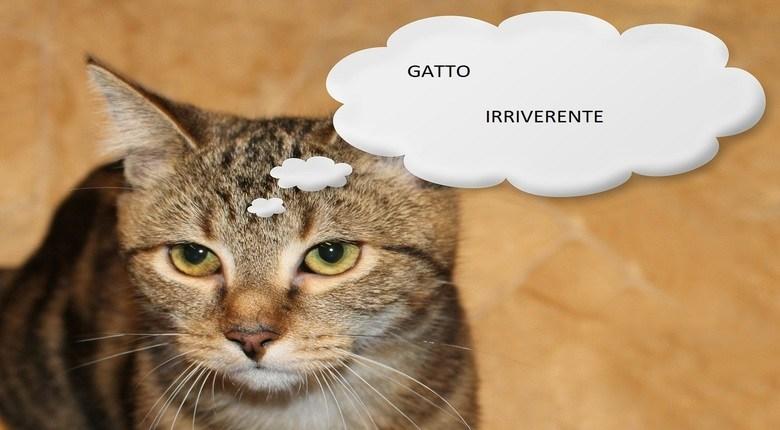 Gatto Irriverente Cose Di Gatti