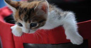 laser-per-gatti-guida-allacquisto