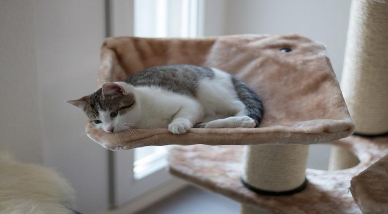 Mensole Per Gatti Da Parete Cose Di Gatti