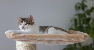 parete-per-arrampicata-per-gatti-silvio-design-amazon