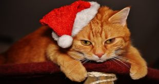 abbigliamento-per-gatti-vestitini