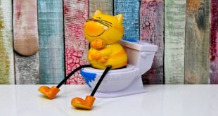 miglior-toilette-per-gatti-guida-all-acquisto