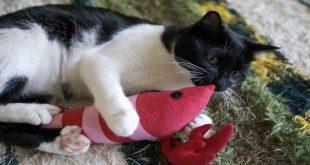 pesce-giocattolo-per-gatti-peluche-dove-acquistarli