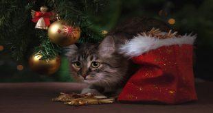 regali-di-natele-per-gatti-idee-e-consigli