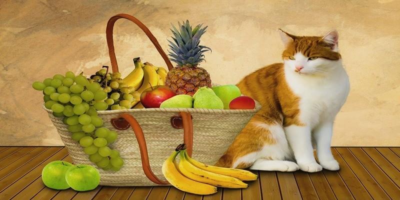 cibi-da-evitare-gatto
