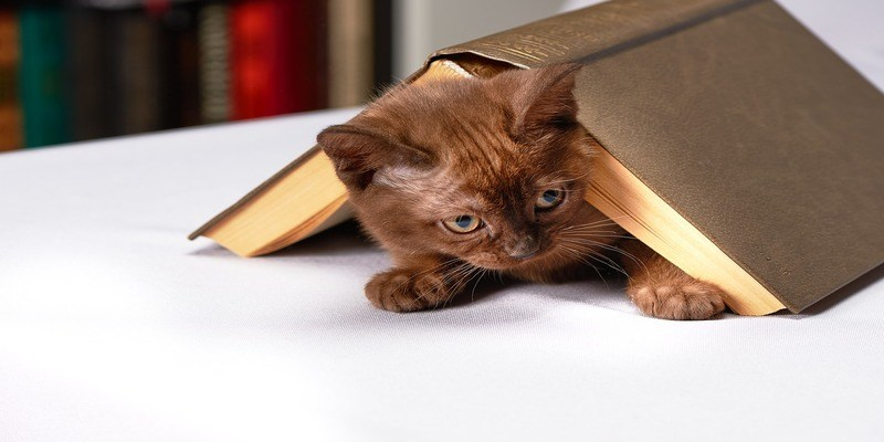come-educare-il-gatto
