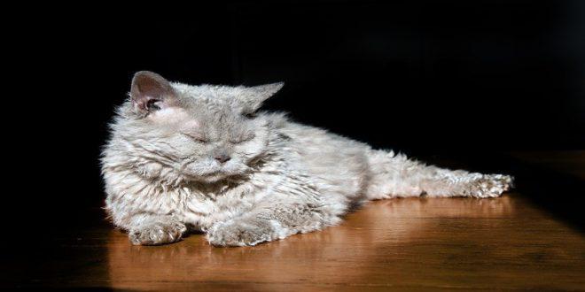 gatti-e-parquet-consigli-utili