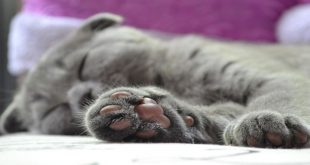 gatti-mancini-esistono