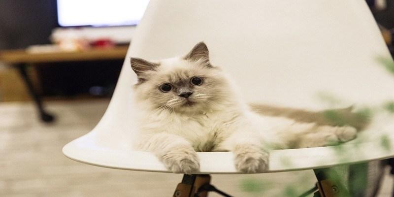 gatto-dispetti-casa