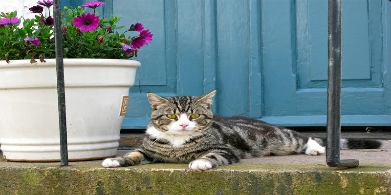 gatto-piante