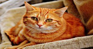 orangey-gatto-colazione-da-tiffany