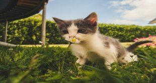passeggino-per-gatti-guida-all-acquisto