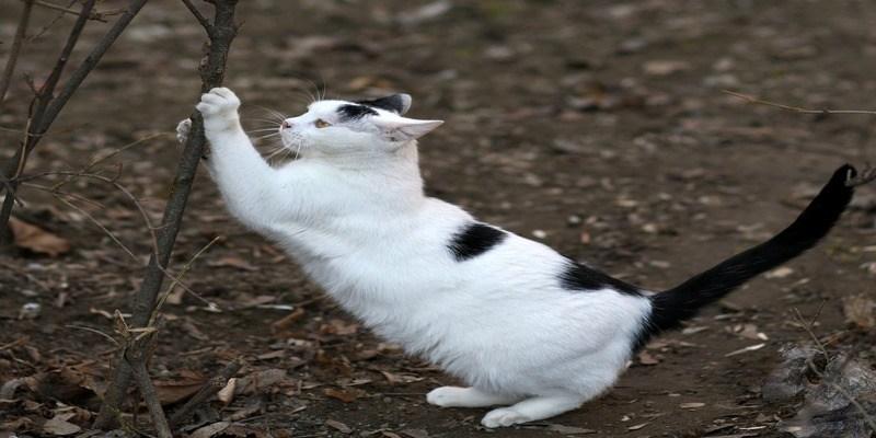 affilamento-artigli-gatto-mobili-casa