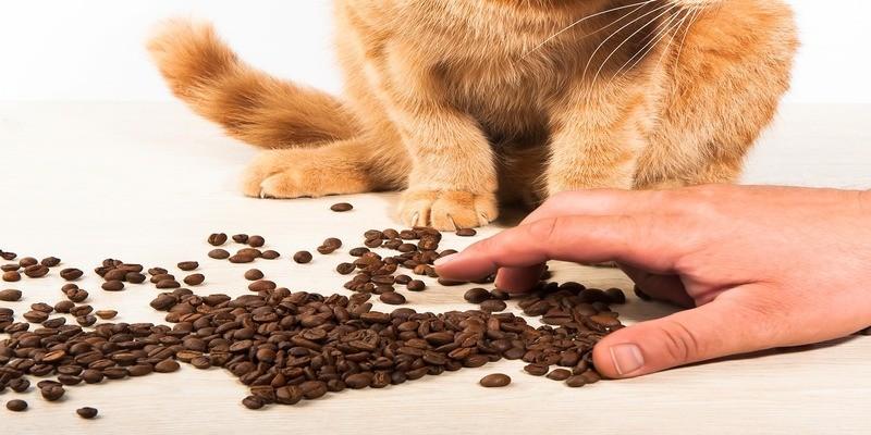 dieta-cibo-gatti