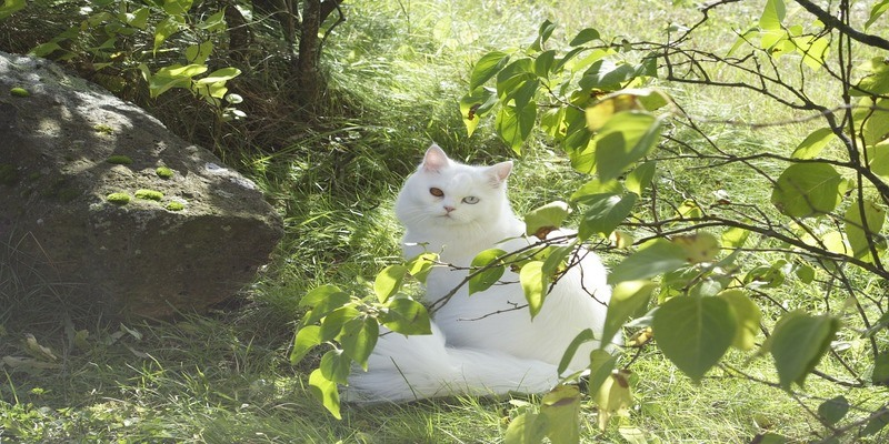 gatto-james-bond