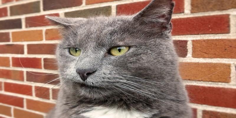 gatto-stressato-rabbia