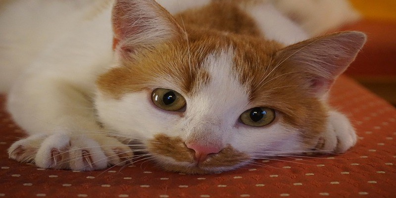 gatto-unghie-divano