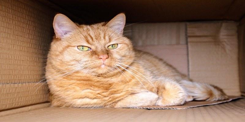 nascondiglio-scatola-gatto
