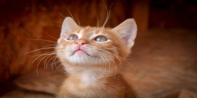 olfatto-gatti-cosa-sapere