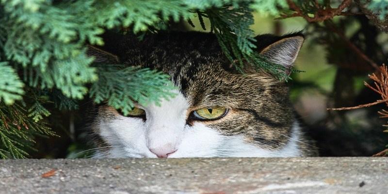 piante-nascondiglio-gatto