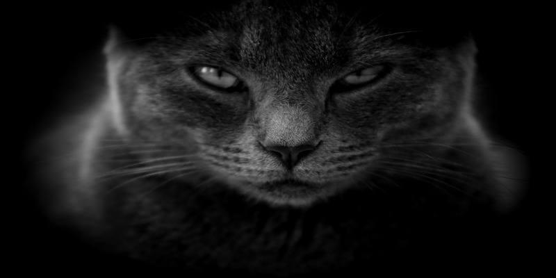 quando-il-gatto-si-arrabbia