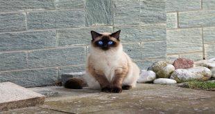 sfigatto-super-gatto-ti-presento-i-miei