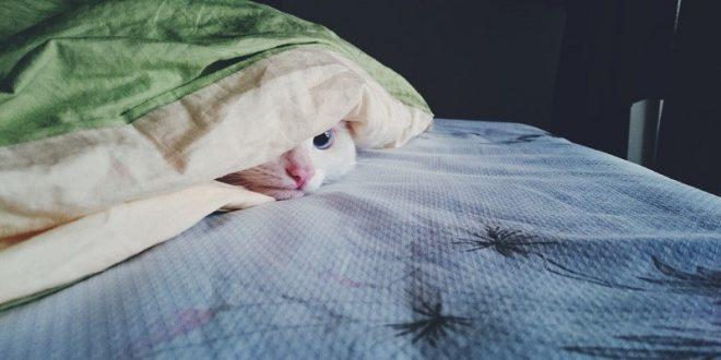 trova-il-gatto-nascondigli-in-casa