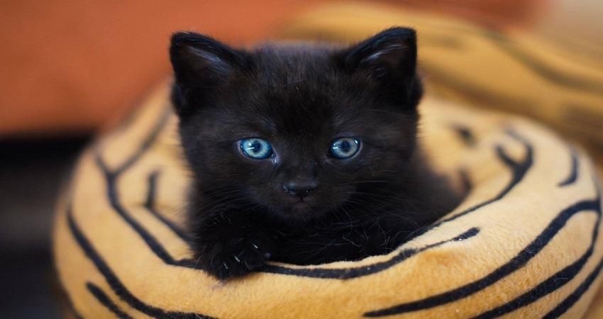 Foto Gatte: Le Migliori Immagini di Gatto