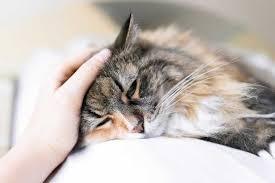 Croccantini Per Gatti Con Problemi Urinari: Guida all'Acquisto