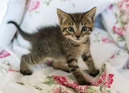 Latte Per Gatti Migliore: Quale Scegliere?