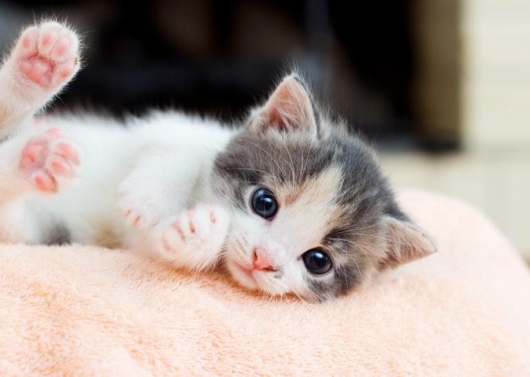Miglior Latte in Polvere Per Gattini: Guida all'Acquisto